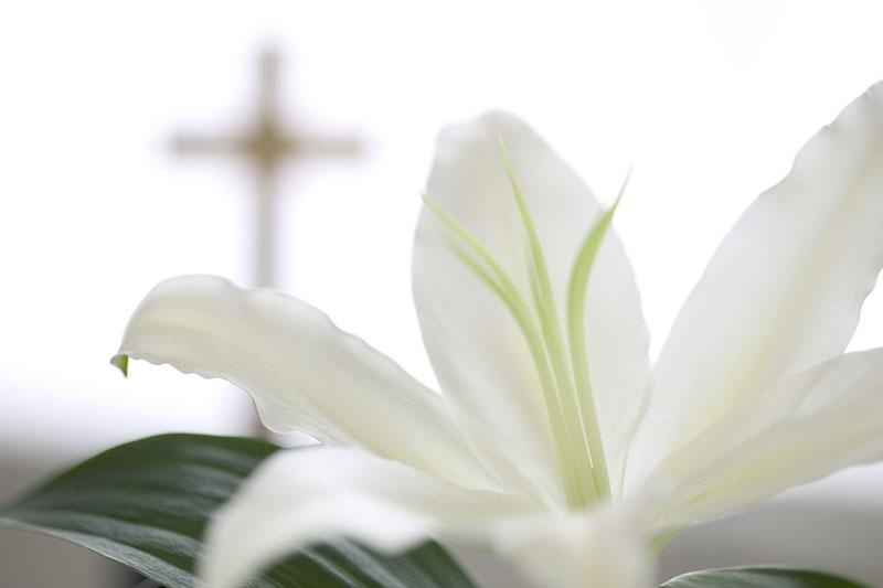04 Mar 2004 --- White Flower near Christian Cross --- Image by © Royalty-Free/Corbis